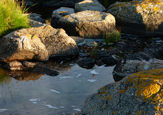 rock-pool-1617441-639x451