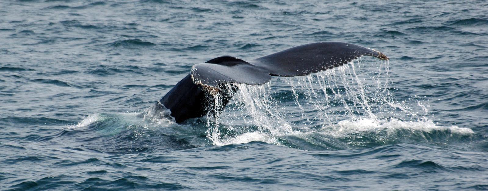 whales-2-1388817-1599x625