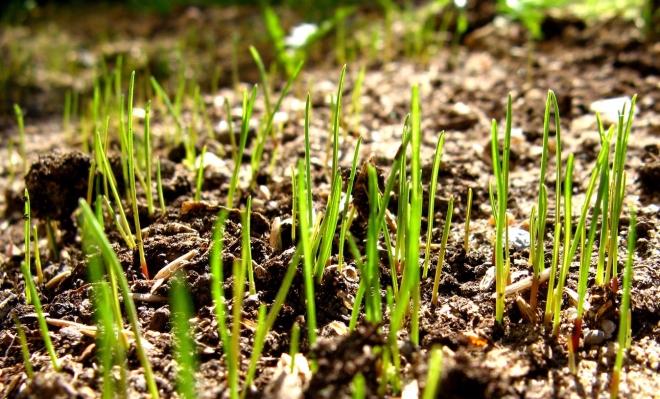 grass-1374264-1600x1200.jpg