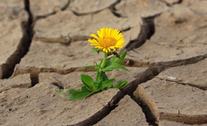 yellow-flower-1630942-1599x1243.jpg