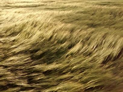 field-1971873_1280.jpg