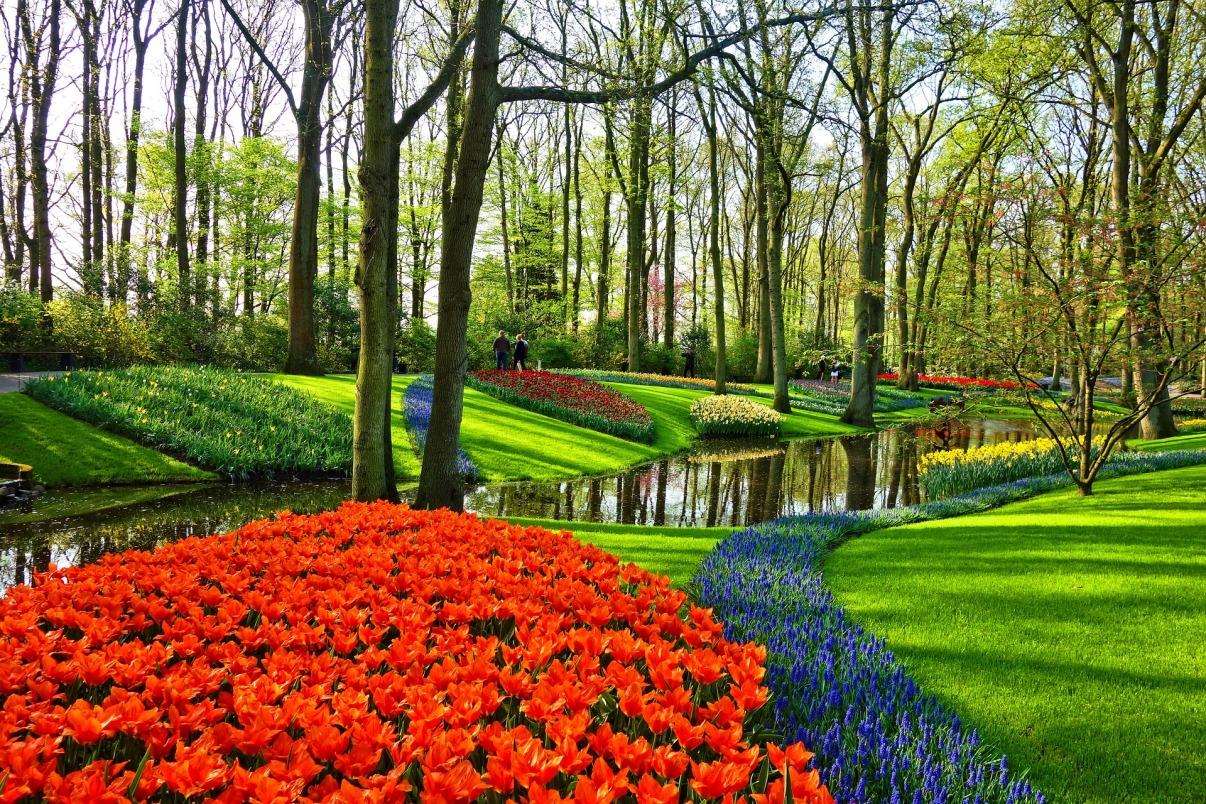 garden-3345970_1920.jpg